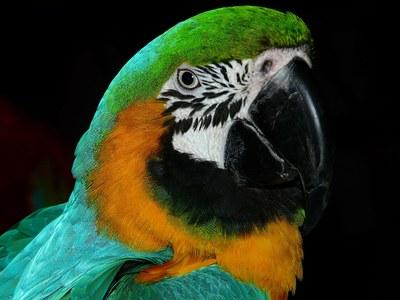 Colorful Parrot- 600x450