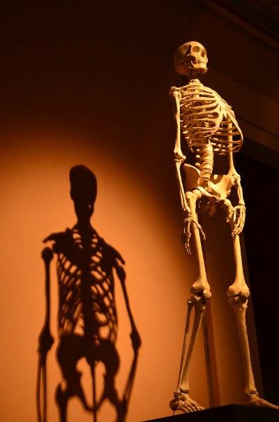 skeleton-400x600.jpg